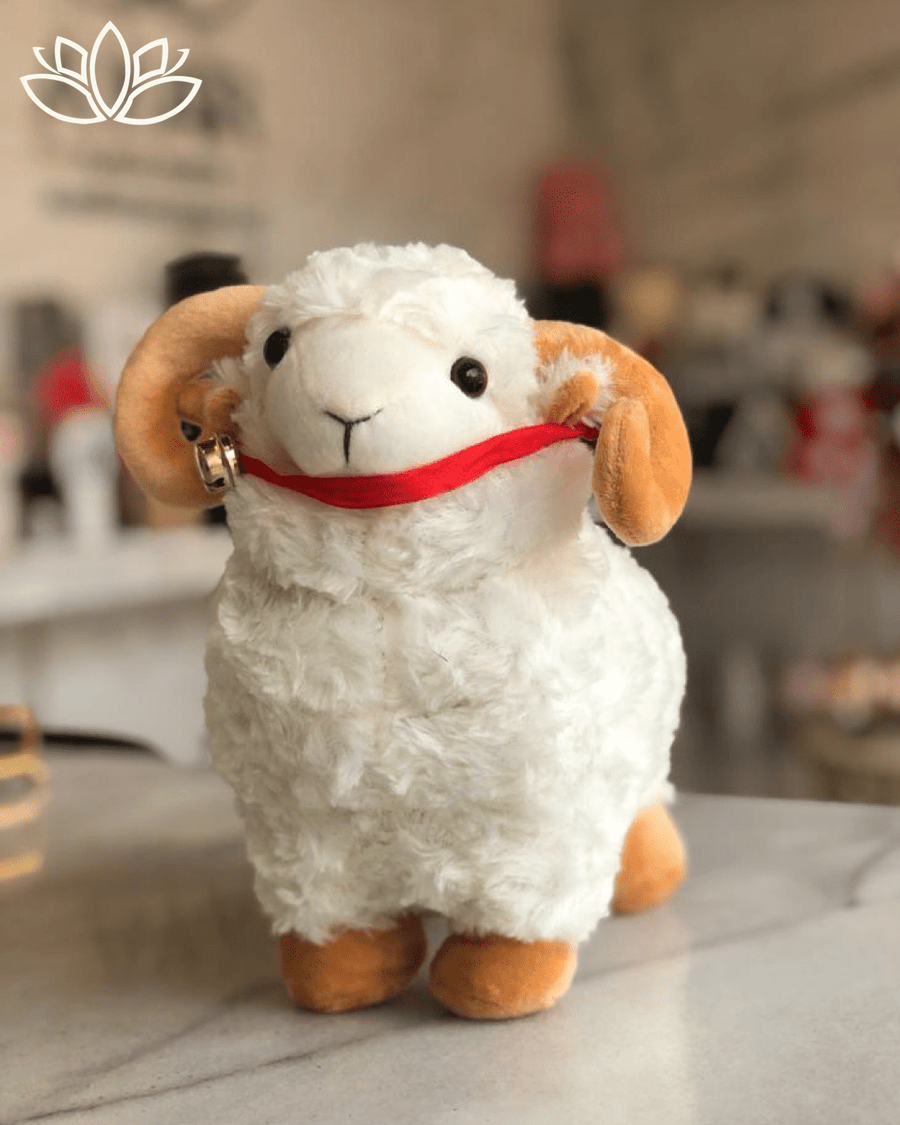 Eid Al-Adhha Sheep