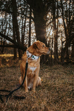Load image into Gallery viewer, Fynn | Dog Collar
