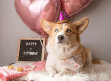 Load image into Gallery viewer, Birthday Party | Dog Bandana