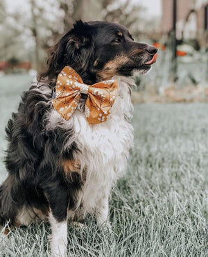 August - Dog Bow tie
