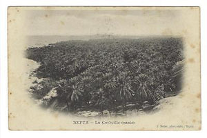 "1904 Tunisia To France Photo Postcard - ""Nefta - Oasis"" (XX74)"