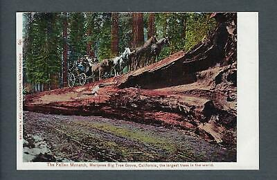 VEGAS - Early 1900s Postcard - Mariposa Big Tree Grove, CA - FD338