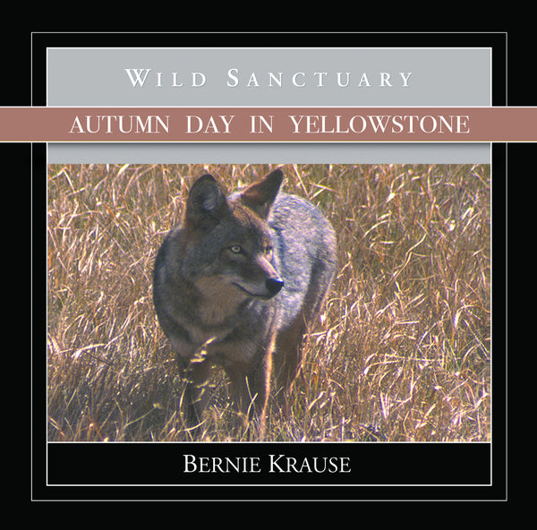 Autumn Day In Yellowstone