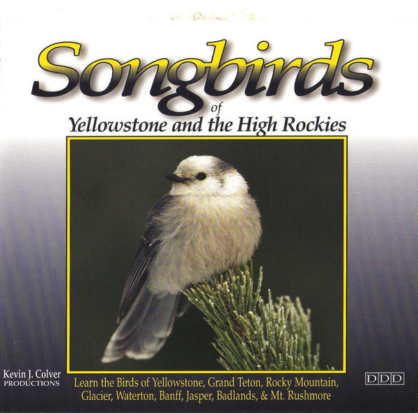 Songbirds Of Yellowstone And The High Rockies