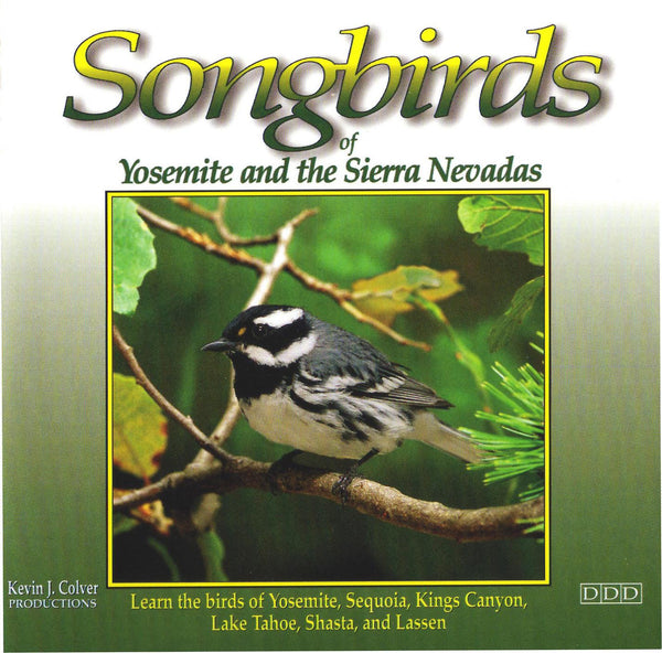 Songbirds Of Yosemite And The Sierra Nevadas