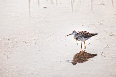 Protecting Shore Birds in New Brunswick