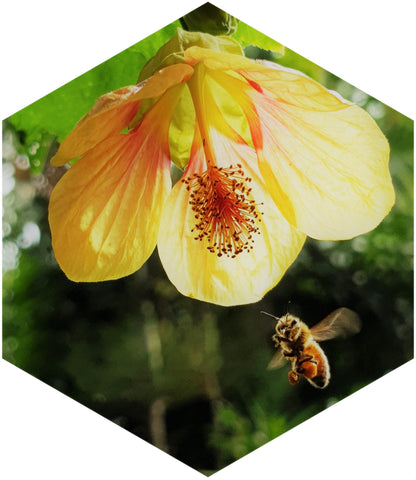 Bee pollinating flower hexagon photo