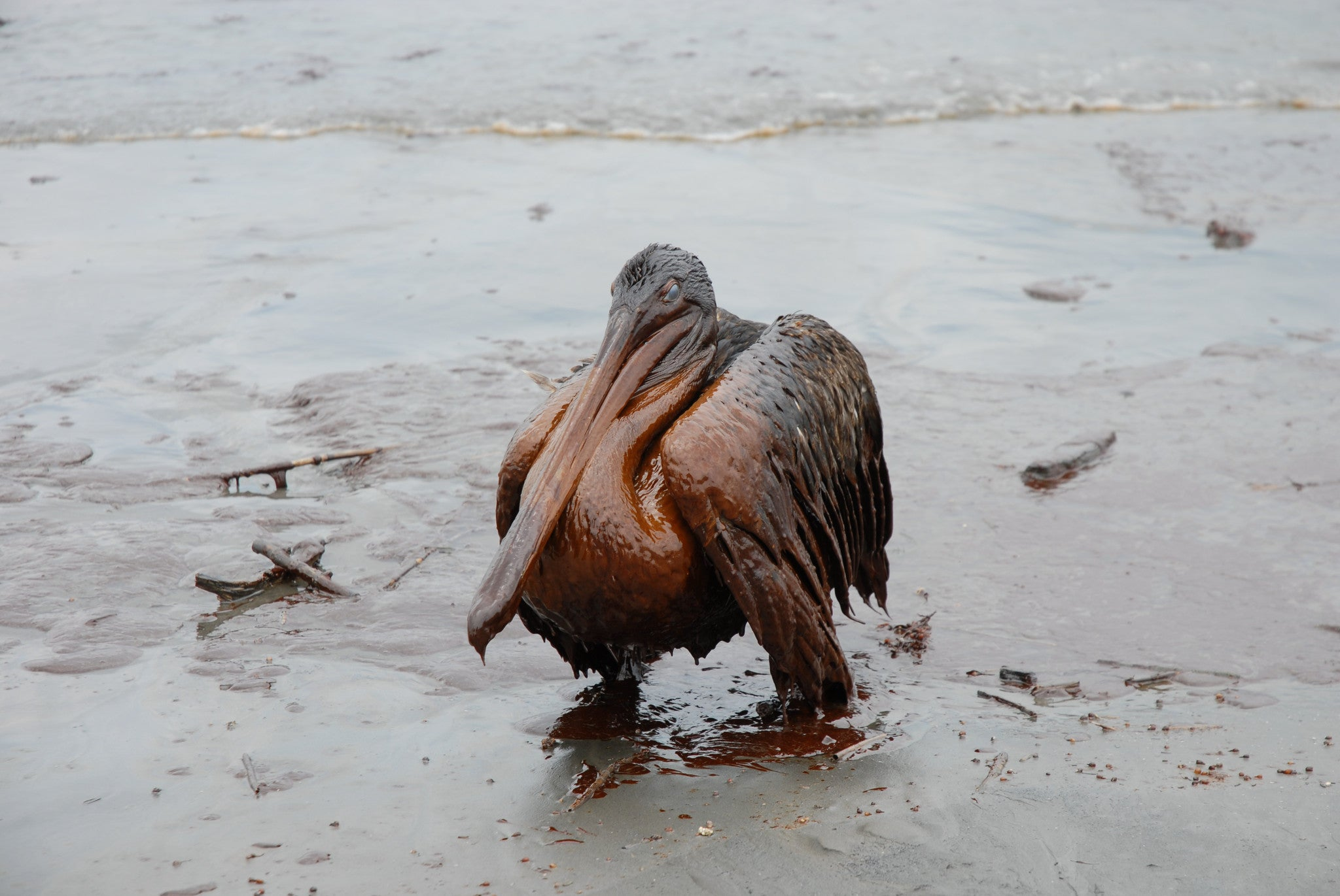 Oil poisoning wildlife after Deepwater Horizon explosion from Ecocide documentary