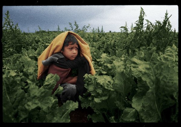 "Scene from documentary ""The Harvest / La Cosecha"