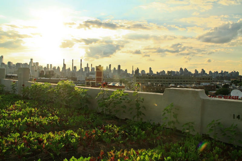 "Rooftop garden from documentary ""Growing Cities"""