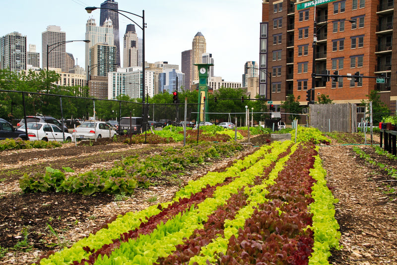 "Urban farm from documentary ""Growing Cities"""