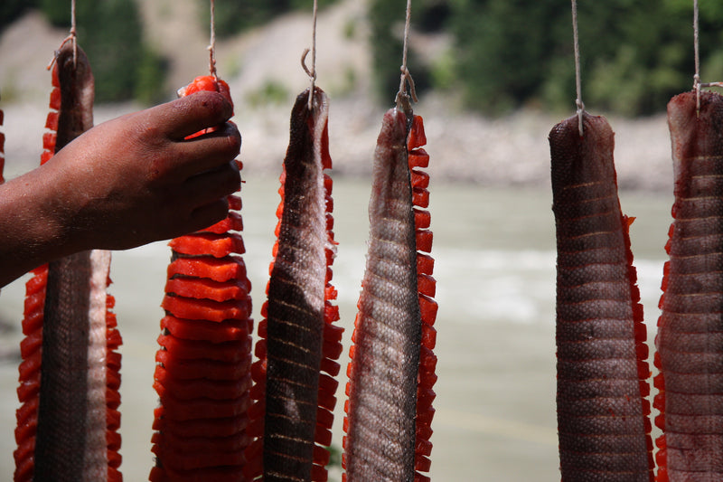 "Drying salmon from documentary ""Salmon Confidential"""