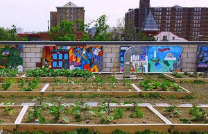 "City garden from documentary ""Edible City"""