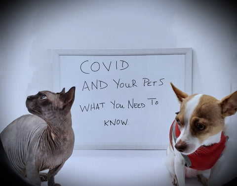 COVID-19 and your Pets!
