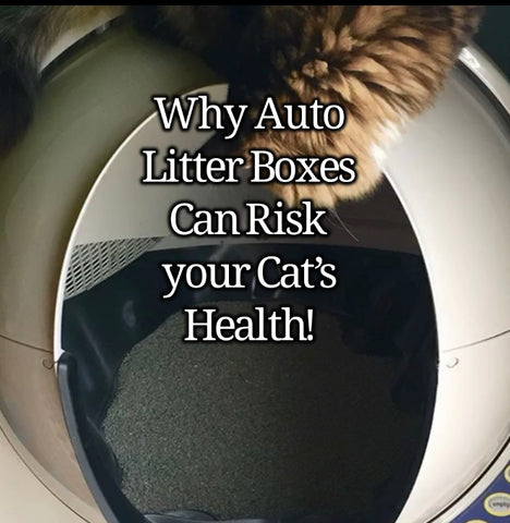 automatic litter boxes bad for cats