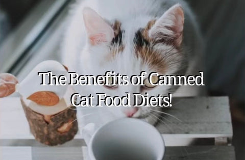 best cat canned foods