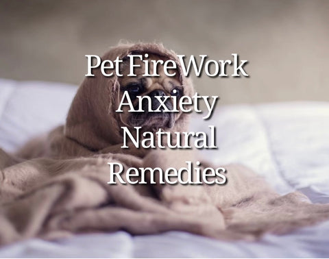 fire work anxiety in pets