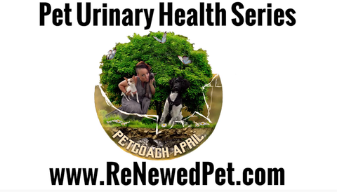 urinary pet health video