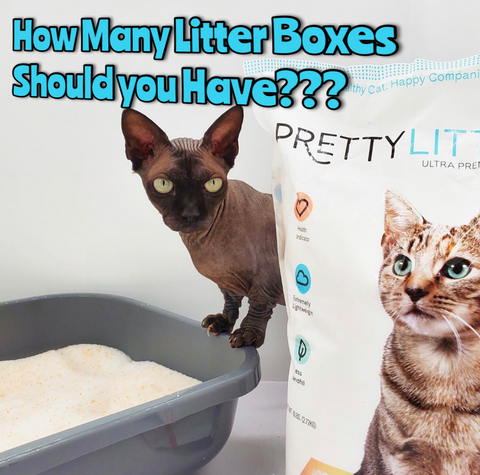 How many cat litter boxes should you have