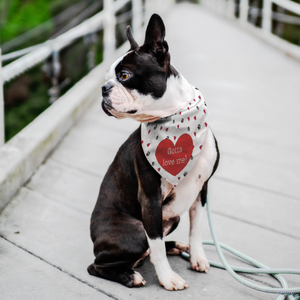 Gotta Love Me! - Pet Bandana - Memorable Treasures Gift of Love for Family and Friends