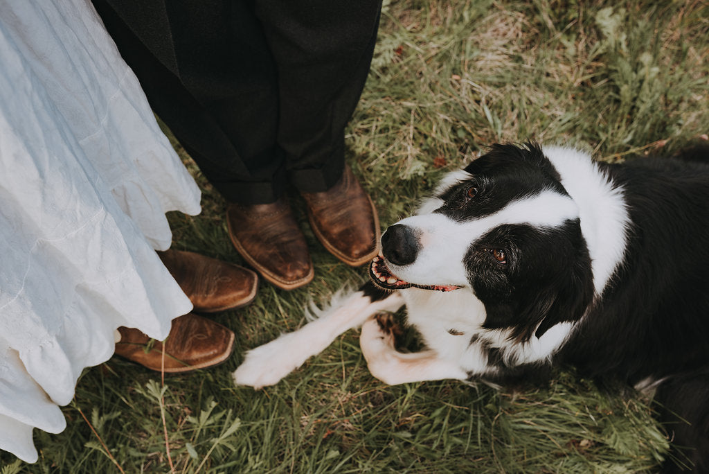 Cait Carr Photography; Montana Lifestyle Western Wedding