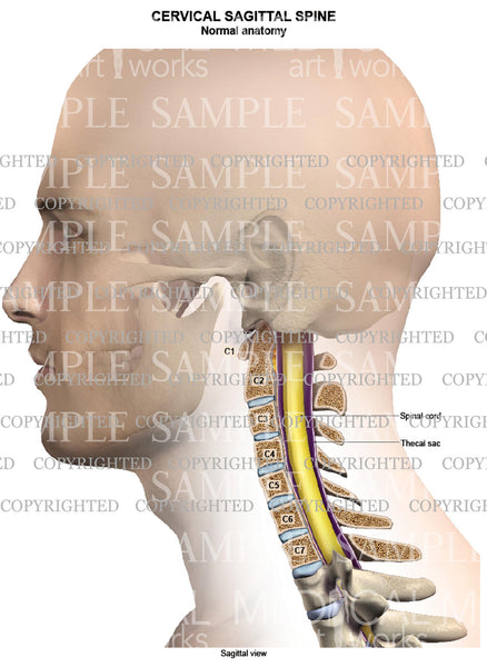 Cervical spine normal anatomy - sagittal view - Male