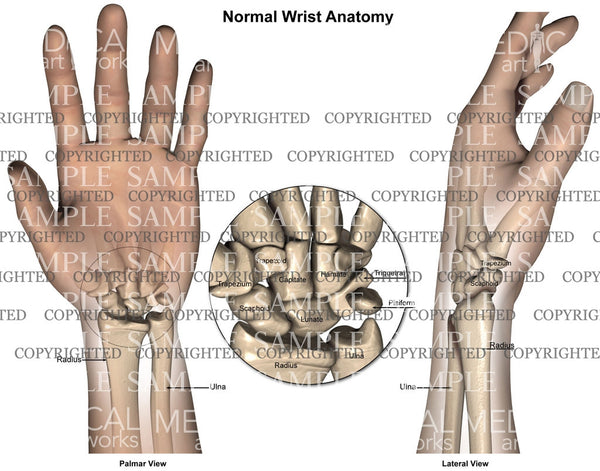 Normal wrist hand anatomy - all views