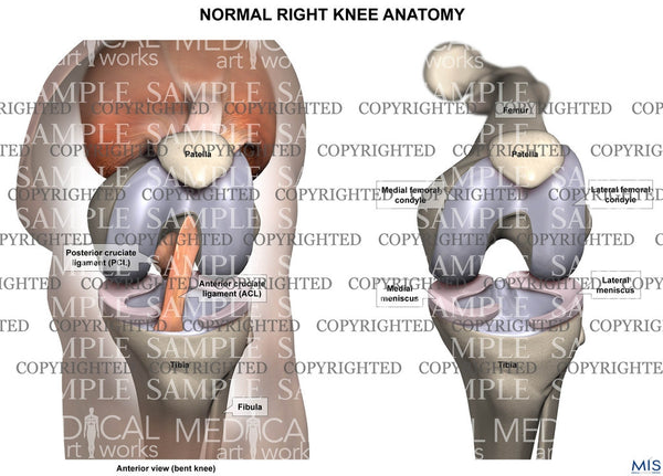 Normal Right Knee Anatomy Anterior View Of Bent Knee Medical Art