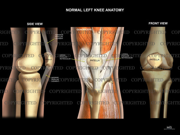 Normal Left Knee Anatomy 5