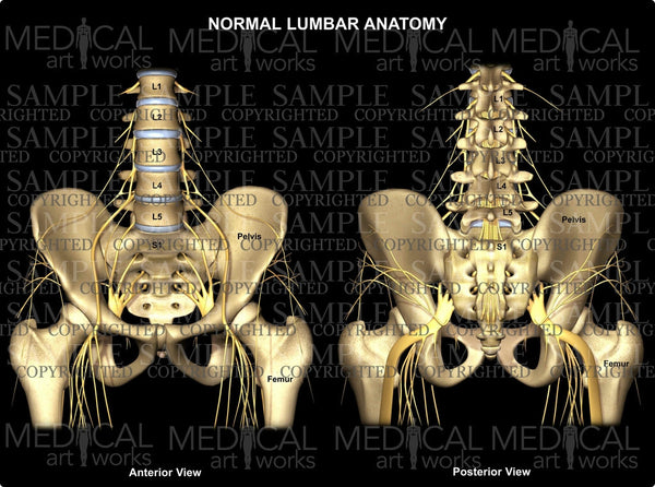 Normal Lumbar & Hip Anatomy