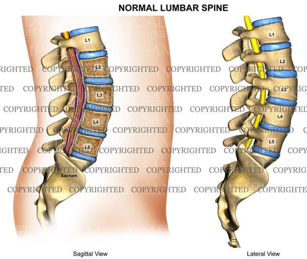 Lumbar Spine Normal Anatomy