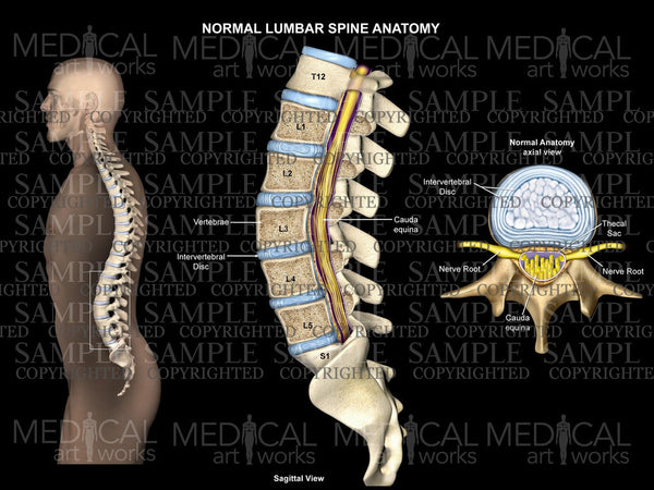 Normal lumbar spine anatomy black background