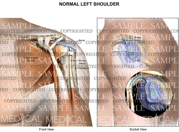 Normal Left shoulder anatomy with socket view