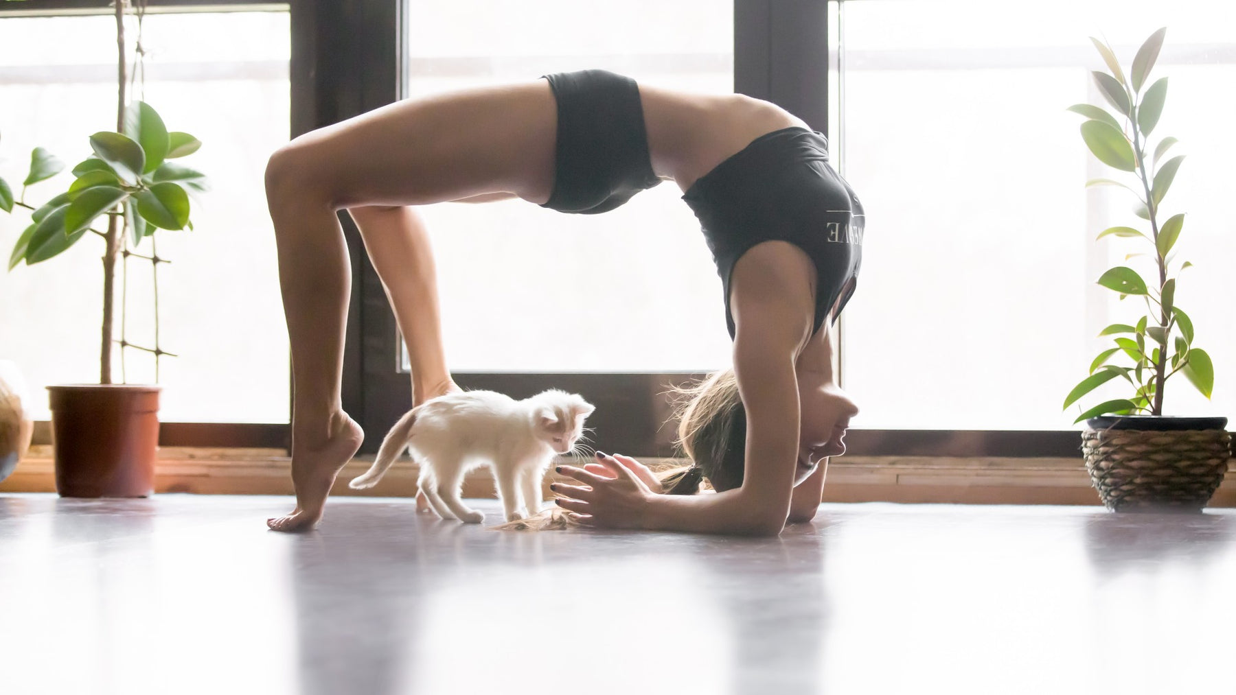 Cat Yoga - Paws & Purrs For Health and Relaxation