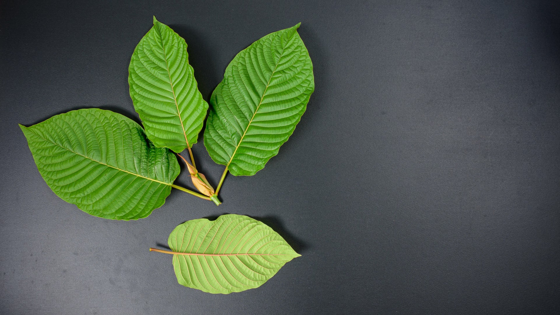 Kratom: Guide to Benefits and Safety Concerns