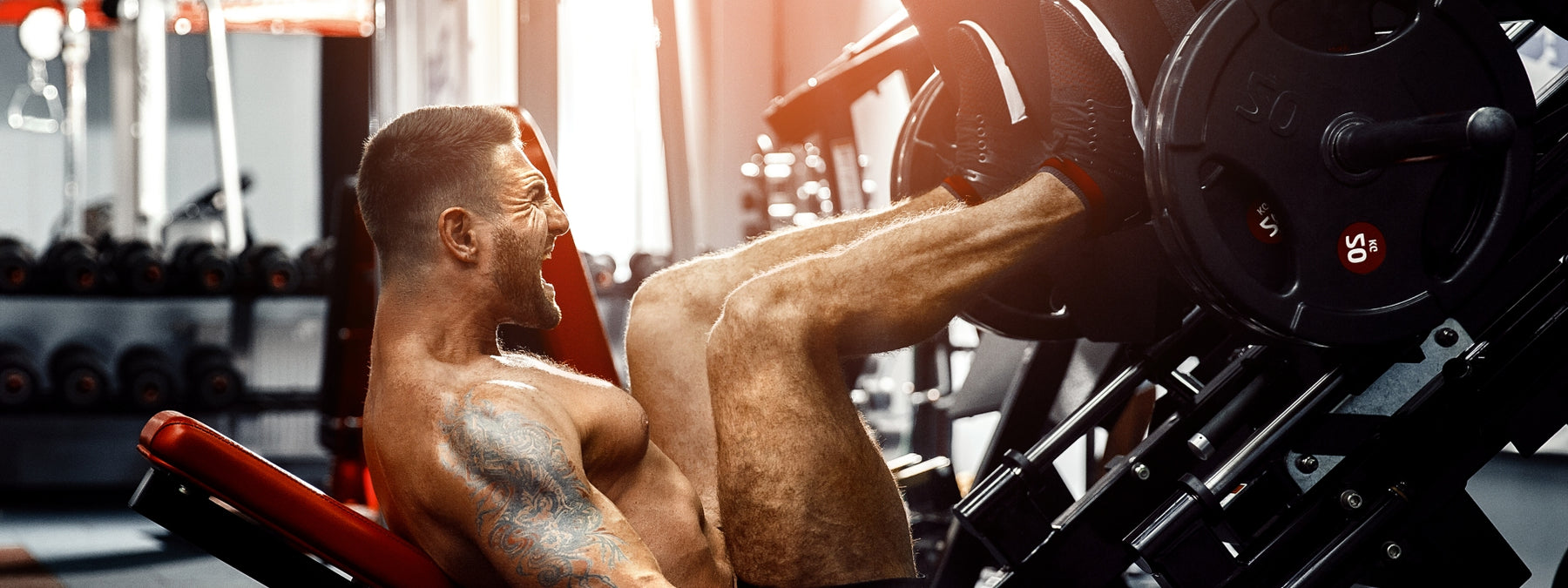 10 Muscle Building Facts Everyone Needs to Know