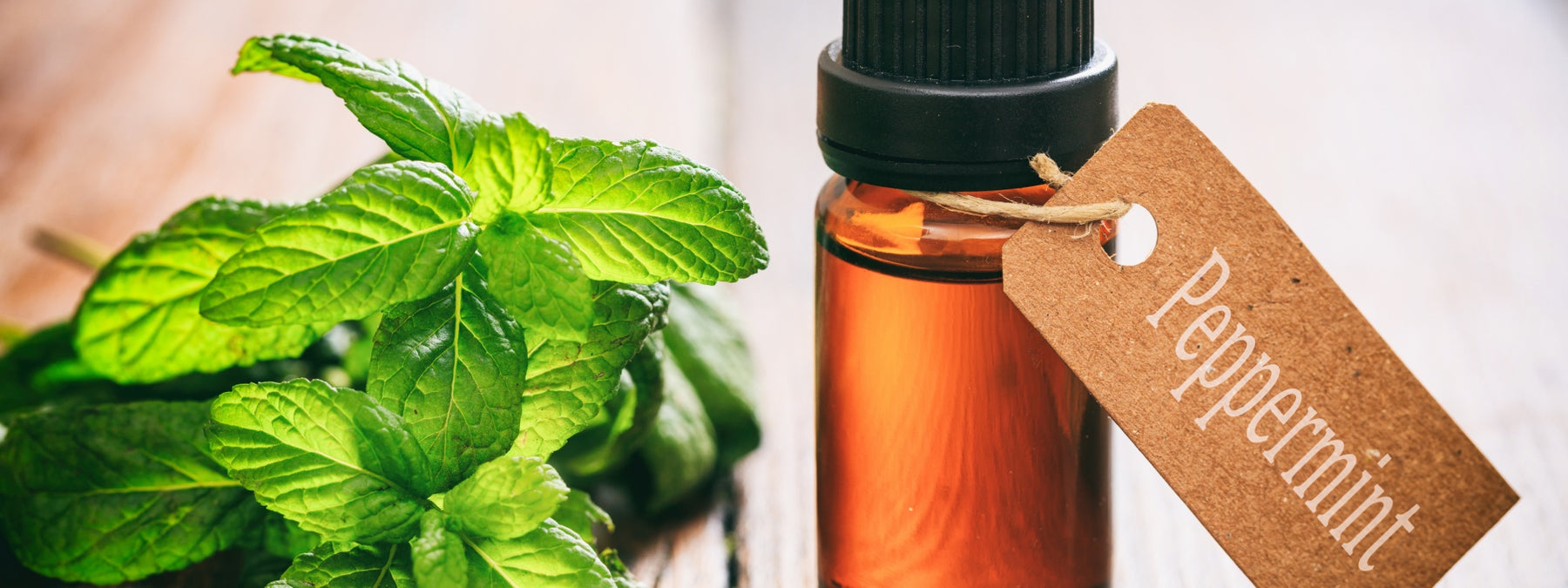 Peppermint Essential Oil - History, Uses, and Benefits