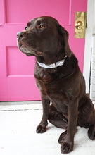 Chocolate Lab Lucy in the Sky with Diamonds Dog Collar