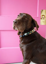 Chocolate Lab Family Jewels Collar