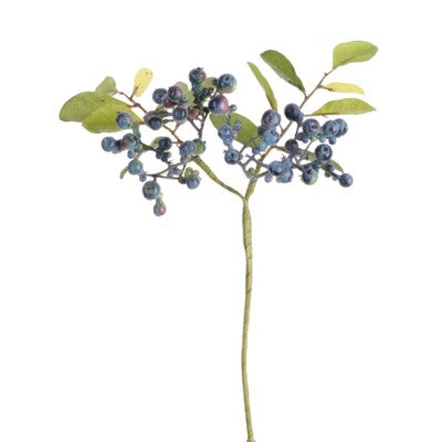 Blueberry Branch #10791800