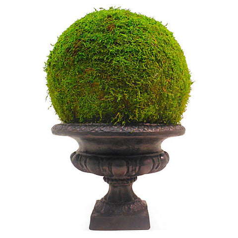 "18"" Moss Ball in Urn, Preserved #FBC1801.GR"