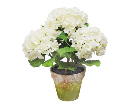 THREE WHITE HYDRANGEA POTTED 1P4064.WH00