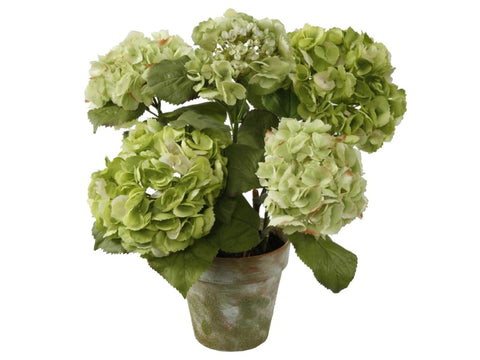 MEDIUM POTTED HYDRANGEA GREEN #1P4065.LGGR
