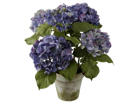 MEDIUM PURPLE & GREEN HYDRANGEA POTTED #1P4065.PUGR00