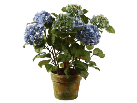 LARGE POTTED HYDRANGEA 1P4205.LB00