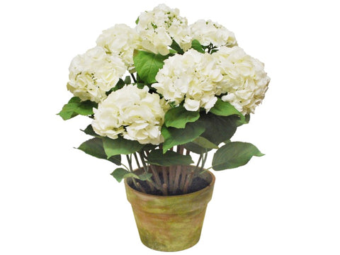 LARGE POTTED HYDRANGEA WHITE 1P4205.WH00