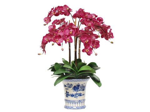 PHALAENOPSIS IN CHINA POT