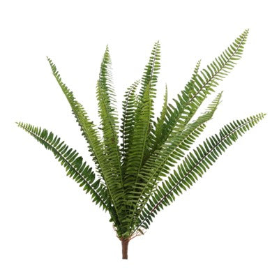 Sword Fern Branch #13003400