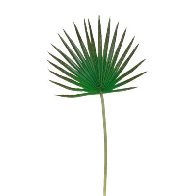 Fan Palm Leaf #13020300