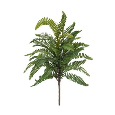 Sword Fern Bush #13034100